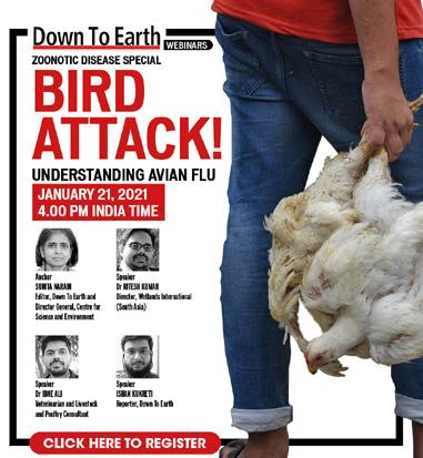 _Bird attack